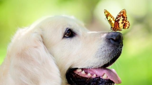 Бешенство у людей — признаки, диагностика, прививка против бешенства, симптомы бешенства у животных