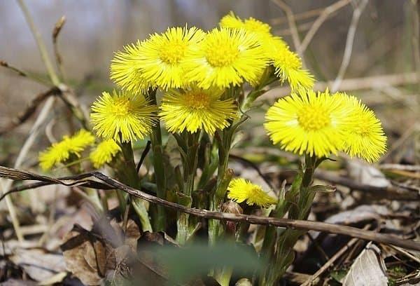 Народные средства от бронхита у взрослых: какие травы принимать, фитотерапия