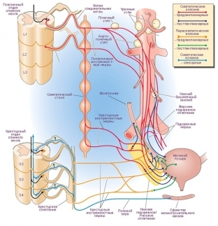 Дисфункции мочевого пузыря по гипертоническому и гипотоническому типу: симптомы и лечение
